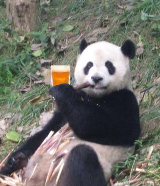 panda beer