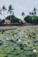 water-lily-pods-on-body-of-water-1850530